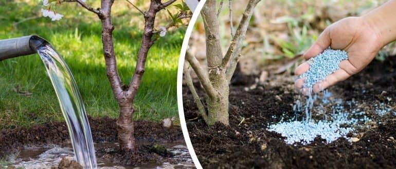 Плодові дерева у мене щороку усипані яблуками. Розповідаю, чим я підживляю їх навесні, щоб отримувати рясний урожай