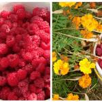 Весняна обробка малини для збору рясного врожаю влітку