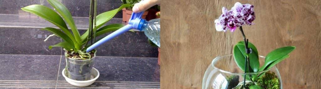 Ефективний засіб, який заставить вашу орхідею знову цвісти